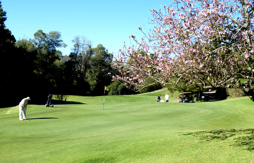 plett-golf-course-trees-1